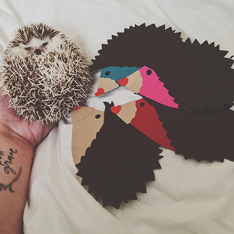 paper source valentines hedge hogs